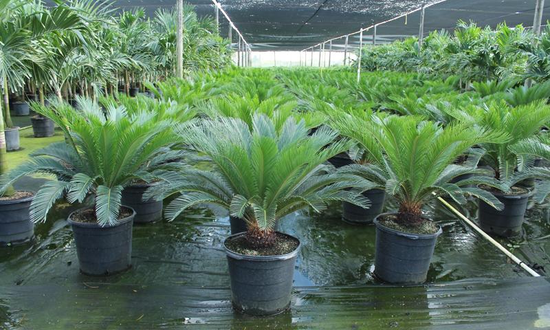 palms_07